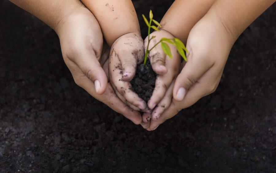 Una piantina tra le mani di una bambina aiutata dalle mani della madre. Vita