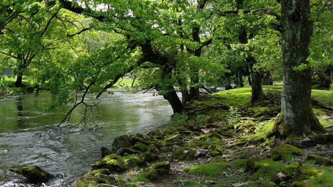 Ruscello nel bosco - Natura - Verde - Piante
